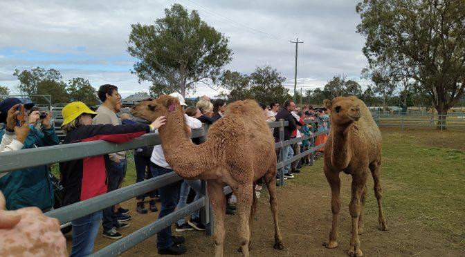 Camel Farm & AGM Harrisville / Boonah 26-27/06/2021